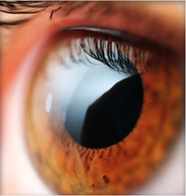 b3d0d47ac6 Optica, contactologia. Lentes contacto y sol, Audifonos, protesis ...